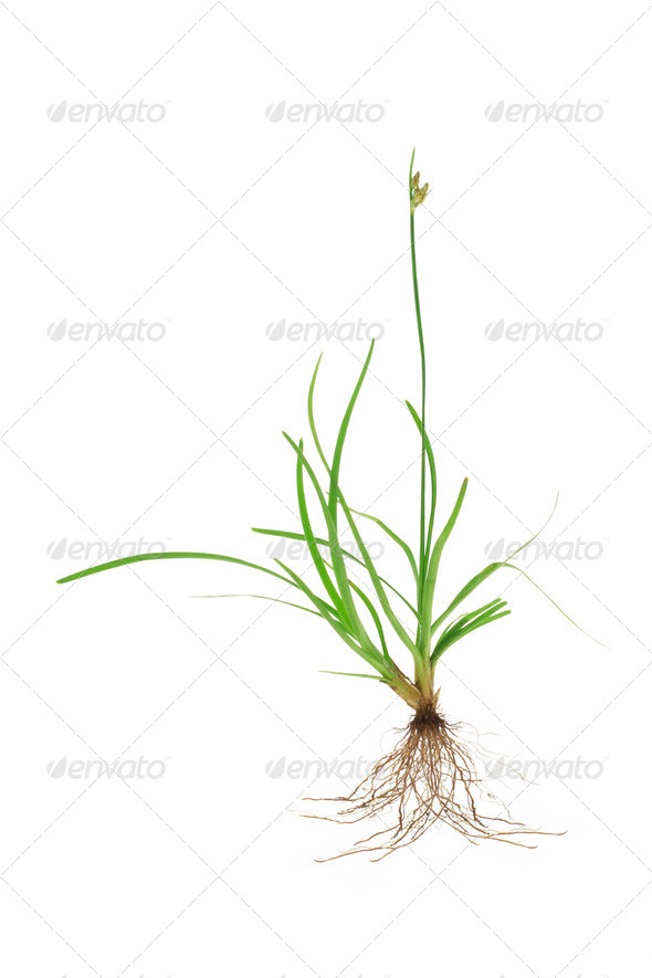 Tropical green grass - Stock Photo - Images