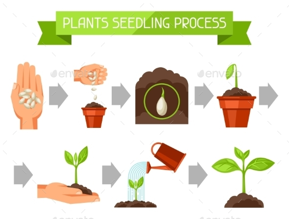 Seedling Infographics With Phases Of Plant Growth - Industries Business