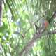 Indian Woodpecker Perched on Tree - VideoHive Item for Sale