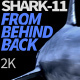 Shark 11 From Behind Back - VideoHive Item for Sale