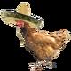 Chicken Clucking