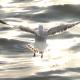 Flock Of Birds On Blue Sky - 8