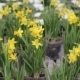 Narcissus Growing In Greenhouse - VideoHive Item for Sale