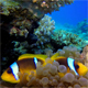 Coloful Underwater Clownfish and Sea Anemones - VideoHive Item for Sale