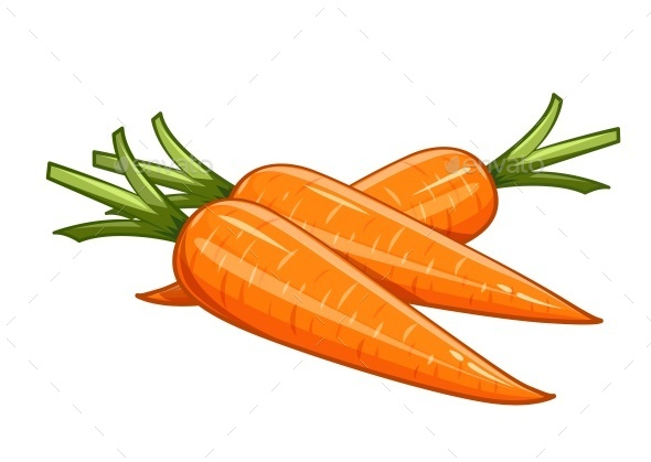 Carrot Vector Illustration - Organic Objects Objects