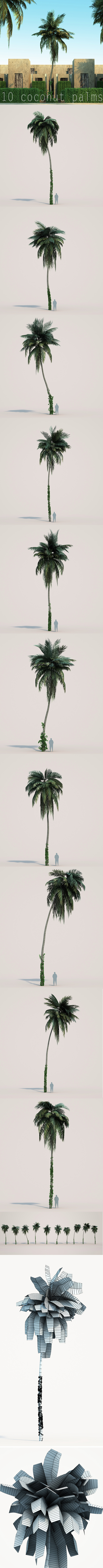 10 coconuts trees - 3DOcean Item for Sale