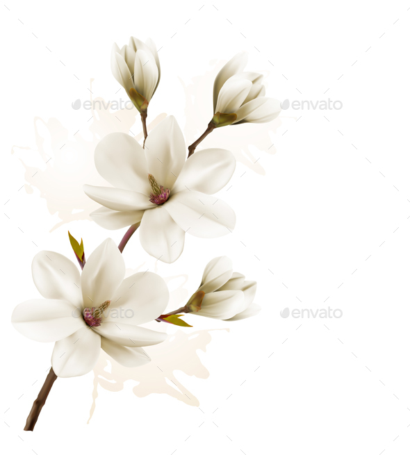Spring Background with Magnolia - Flowers & Plants Nature