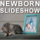 Kittens Lullaby - Baby Photo Album - VideoHive Item for Sale