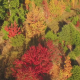 Autumn Fall Trees in Field - VideoHive Item for Sale