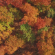 Aerial Above Autumn Fall Tree Tops - VideoHive Item for Sale