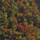 Epic Aerial of Colorful Fall Trees - VideoHive Item for Sale