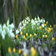 Snowdrops Part 4 - VideoHive Item for Sale