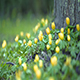 Winter Aconite Part 1 - VideoHive Item for Sale