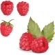 Raspberries Over White - GraphicRiver Item for Sale