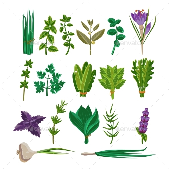 Cooking Herbs Collection - Flowers & Plants Nature