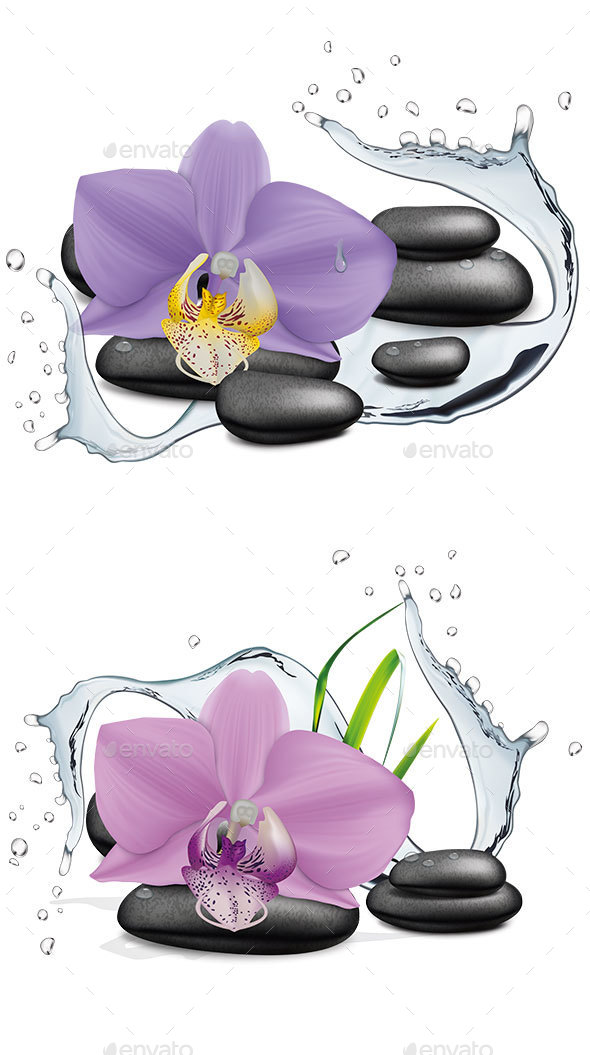 Orchid Flower, Water Splash and Zen Stone - Organic Objects Objects