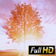 Sunset Behind Tree - VideoHive Item for Sale