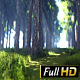 Summer Forest Way - VideoHive Item for Sale