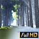 Winter To Spring Forest - VideoHive Item for Sale