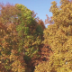 Aerial of Fall Trees - VideoHive Item for Sale
