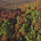 Aerial Fly Over of Autumn Fall Leaves - VideoHive Item for Sale