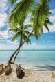 Tropical beach in Saona island, Dominican Republic - PhotoDune Item for Sale