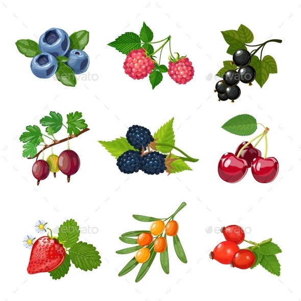 Berries of Trees and Shrubs Set  - Food Objects