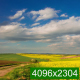 Yellow Wildflowers and Clouds - VideoHive Item for Sale