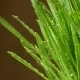 Grass With Splashes Of Water - VideoHive Item for Sale