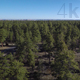 Above the Arizona Forest - VideoHive Item for Sale