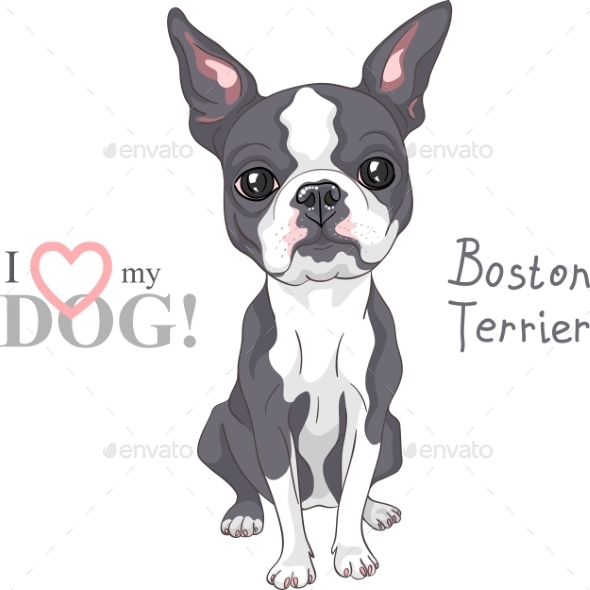 Sketch Dog Boston Terrier Breed Serious Face - Animals Characters