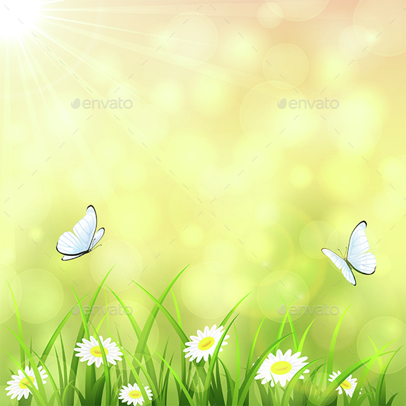 Sunny Summer Background - Seasons Nature