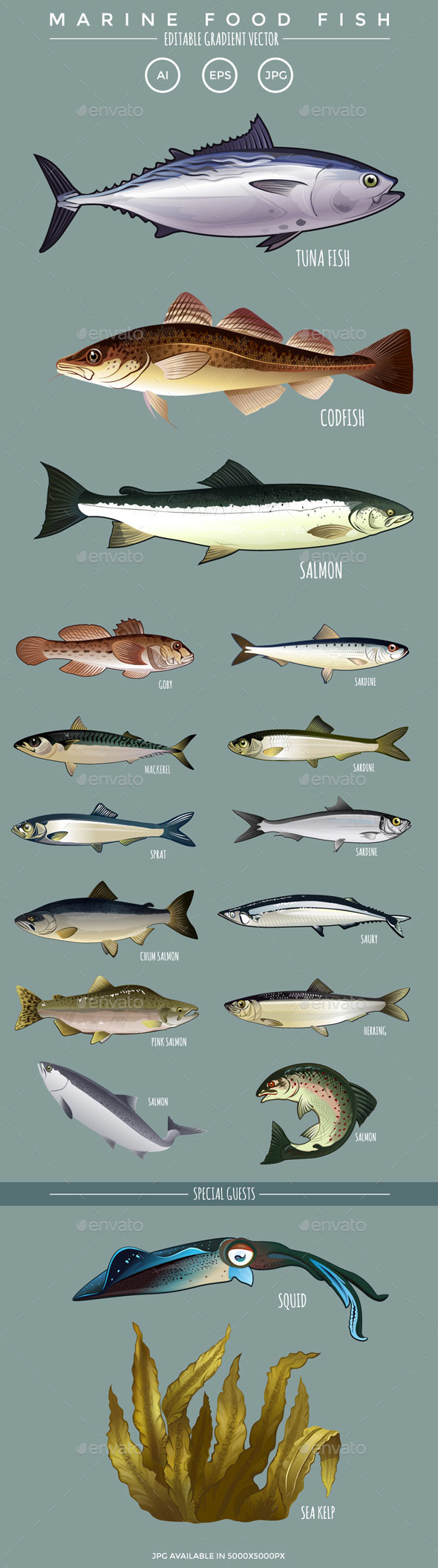 Marine Food Fish - Food Objects