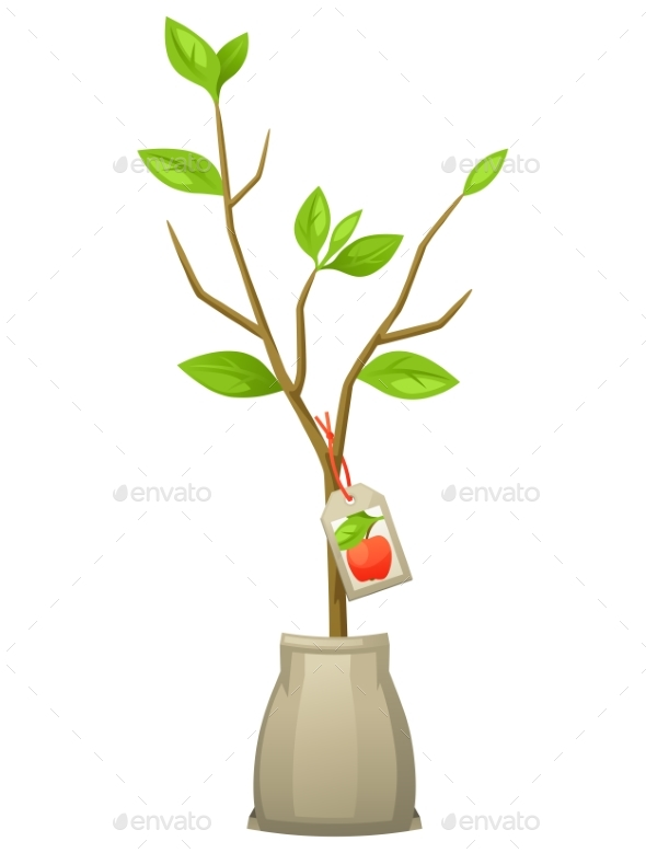 Seedling of Apple Tree with Tag - Flowers & Plants Nature