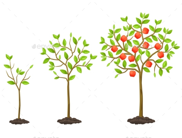 Growth Cycle from Seedling to Fruit Tree - Flowers & Plants Nature