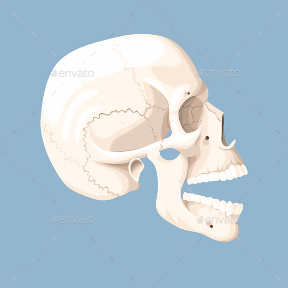 Human Skull with Open Mouth - Health/Medicine Conceptual