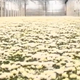 Extreme Long Slidershot in a Greenhouse with Flowers Floriculture Crane - VideoHive Item for Sale