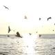 Flock Of Birds On Blue Sky - 11
