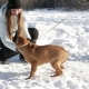 Beautiful Woman Playing With The Dog Outdoors In Winter Landscape - VideoHive Item for Sale