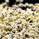 Popcorn Black Background - VideoHive Item for Sale