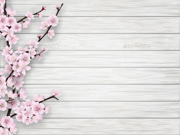 Cherry Pink Flower on White Old Wood Background - Flowers & Plants Nature
