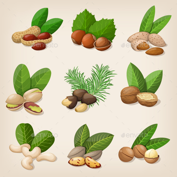 Set of Vector Various Nuts - Food Objects