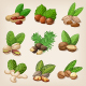 Set of Vector Various Nuts - GraphicRiver Item for Sale