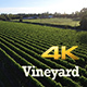 Vineyard - VideoHive Item for Sale