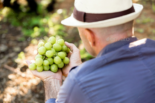 Man standing in vineyard - Stock Photo - Images