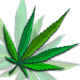 Cannabis Gektor Background 2 - VideoHive Item for Sale