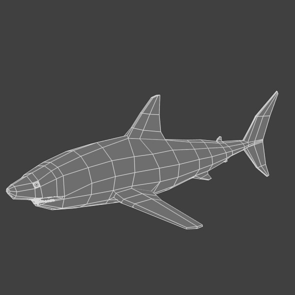 Low Poly Base Mesh Shark - 3DOcean Item for Sale