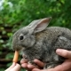 Rabbit. Feeding Animal  - VideoHive Item for Sale