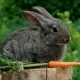 Rabbit. Beautiful Animal Of Nature - VideoHive Item for Sale