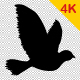Bird Flying - VideoHive Item for Sale